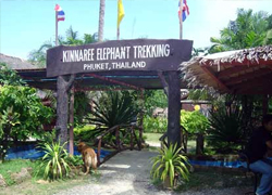 Kinaree House Elephant Trekking